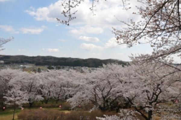 越生桜祭り